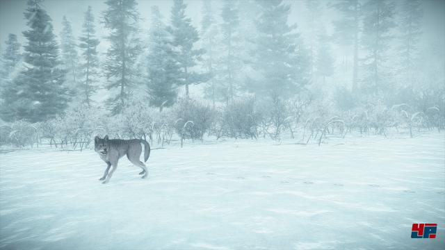 Kona spielt im kanadischen Québec: Nach einem Schneesturm sitzt ein Privatdetektiv in einer kleinen Siedlung fest.