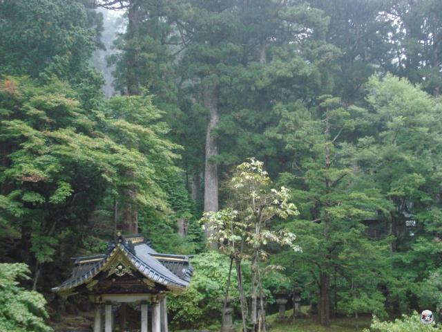 ...wunderschöne Wälder... 2013098