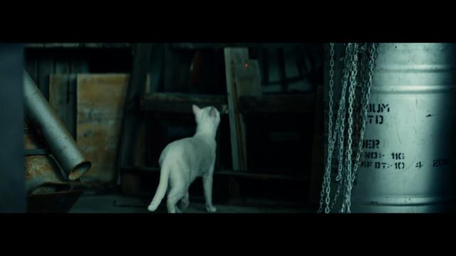 Live-Action-Trailer: Die Katze und der rote Punkt